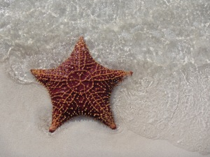 Powell Cay star
