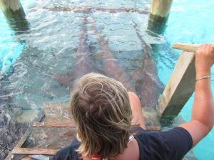 Compass Cay Sharks 9
