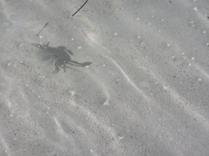 Ghost Crab Shadow