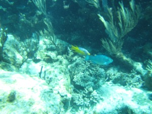 021 - Cambridge Cay Snorkeling